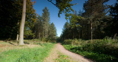 Local photography from CANNOCK