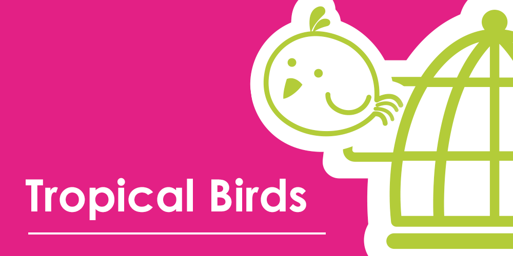 Tropical Birds- What you need to know
